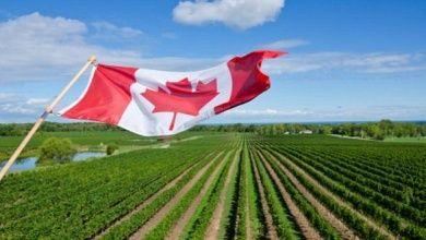 Wein in Kanada