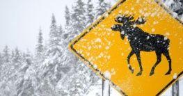 Straßenschild in Kanada